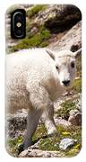Mountain Goat Kid On Mount Evans IPhone Case