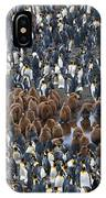 King Penguins IPhone Case