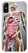 Male Anatomy IPhone Case