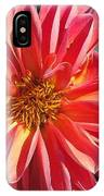 Dahlia From The Showpiece Mix IPhone Case