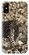 Arabian Leopard Panthera Pardus IPhone Case