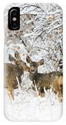 Doe Mule Deer In Snow IPhone Case