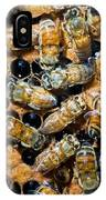 Honey Bees In Hive IPhone Case