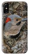 Northern Flicker In Nest Cavity Alaska IPhone X Case