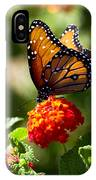 Queen Butterfly  IPhone Case