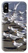 Royal Terns On The Beach At Indialantic In Florida IPhone Case