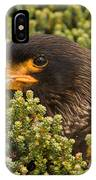 Striated Caracara IPhone Case