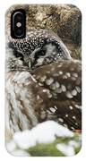 Boreal Owl Pictures IPhone Case