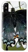 Eastern Black Swallowtail IPhone Case