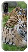 Siberian Tigers, China IPhone Case