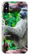 A Baboon In African Bush IPhone Case