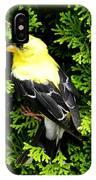 A Bird In The Bush IPhone Case