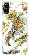 A Collection Of Nudibranchia IPhone Case