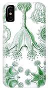 A Collection Of Stauromedusae IPhone Case