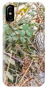 A Coopers Hawk Hidding IPhone Case