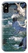 A Group Of Pelicans IPhone Case