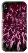 A Happy Birthday Wish With An Elegant Maroon And Pink Mum IPhone Case