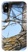 A Pair Of Red-bellied Woodpeckers IPhone Case