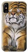 A Tough Day Siberian Tiger Endangered Species Wildlife Rescue IPhone Case