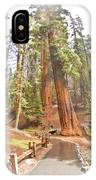 A Walk Among The Giant Sequoias IPhone Case