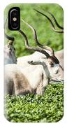 Addax Nasomaculatus IPhone Case