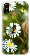 Adult Female Drone Fly Aka Bee Mimic IPhone Case