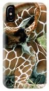 Adult Reticulated Giraffe IPhone Case