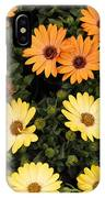 African Daisies IPhone Case