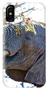 African Elephant Browsing In Kruger National Park-south Africa IPhone Case