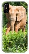 African Elephant Coming Through Trees IPhone Case