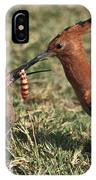 African Hoopoe Feeding Young IPhone Case