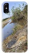 Alligator In Everglades IPhone Case