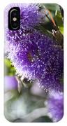 Amazing Purple Melaleuca  IPhone Case