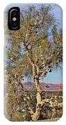 Amboy Shoe Tree By Diana Sainz IPhone Case