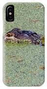 American Alligator 001 IPhone Case