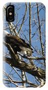 American Bald Eagle In Illinois IPhone Case