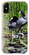 American Coot 1 IPhone Case