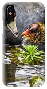 American Coot And Chick IPhone Case