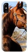 American Saddlebred Stallion IPhone Case