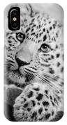 Amur Leopard Cub Portrait IPhone Case