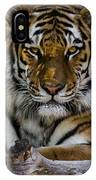 Amur Tiger Watching You IPhone Case