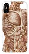 Anatomy Of Human Abdominal Muscles IPhone Case