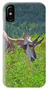 Antelope Near Wildlife Loop Road In Custer State Park-south Dakota- IPhone Case
