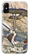 Arabian Oryx In Living Desert In Palm Desert-california IPhone Case