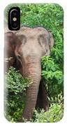 Asian Elephant  Elephas Maximus IPhone Case