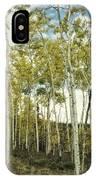 Aspen Trees In Spring  IPhone Case