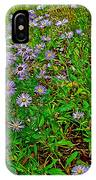 Asters On Heron Lake Trail In Grand Teton National Park-wyoming- IPhone Case