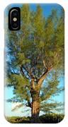Australian Pine At Sundown IPhone Case