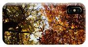 Autumn Chestnut Canopy   IPhone Case