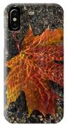 Autumn Colors And Playful Sunlight Patterns - Maple Leaf IPhone Case